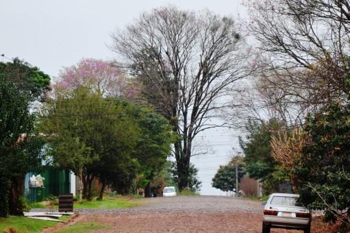 Calle José Asunción Flores casi Maestro Paraguayo. En medio de una vía, un imponente árbol se observa desde lejos.