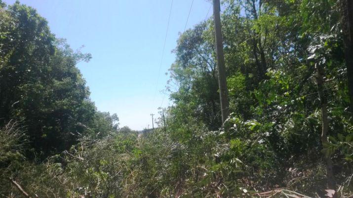 La tala afectó árboles nativos del Parque Ecológico y su área de mitigación (Foto gentileza).